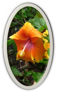 Lei.flower